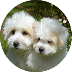 Graphic of two dogs leading to the QCPC Milan Clinic page